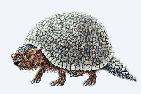 the modern armadillo and the prehistoric glyptodon Although they may not be as commonly known as other prehistoric creatures like the  with their modern-day  other than the present-day armadillo.