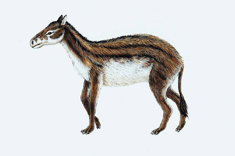 Click here for more Hyracotherium Pictures