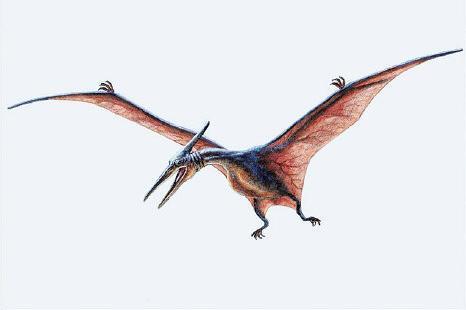 Pterosaur Pictures
