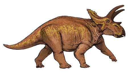 Anchiceratops picture