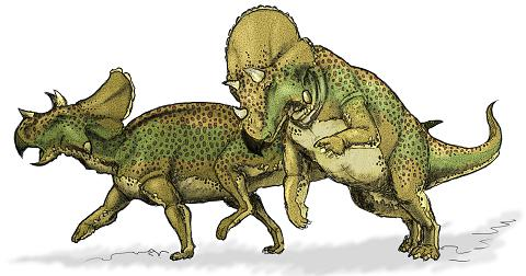 Avaceratops picture 1