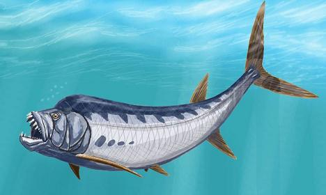 Xiphactinus Facts - information about the extinct ...