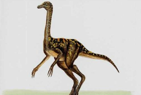 Troodon picture 1