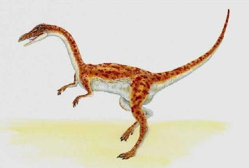 Troodon picture 2