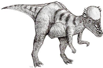 pachycephalosaurus picture 1