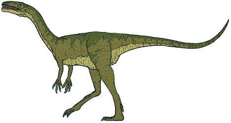 dinosaur picture coelophysis 1
